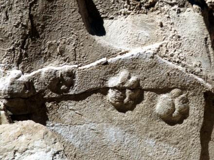 fossil_tracks