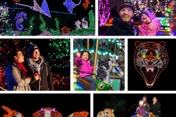 Fun Things to Do and See During Winter Vacation in Seattle