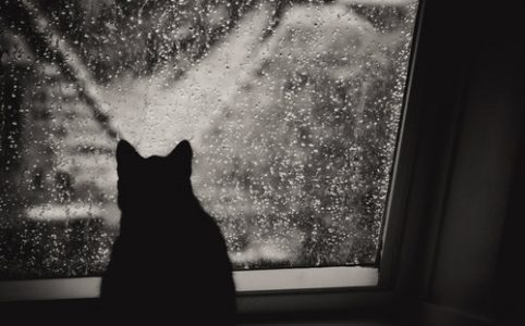 A cat looks out a window at the falling rain