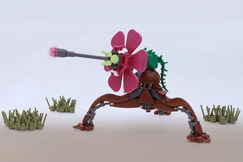 Hibiscus Cannon