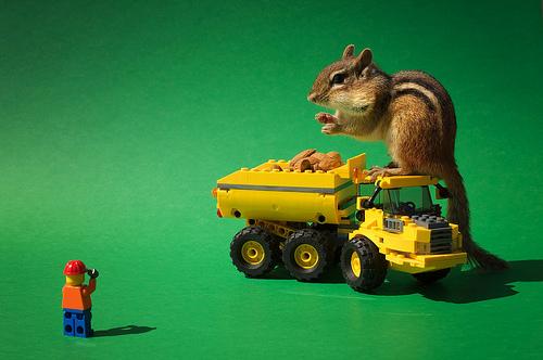 Chipmunk with LEGO dump truck