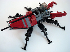 Stag Beetle Solo