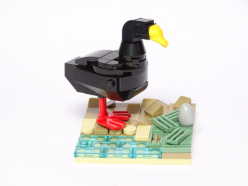 Giant Coot (Fulica gigantea). 1:10 Scale LEGO Model