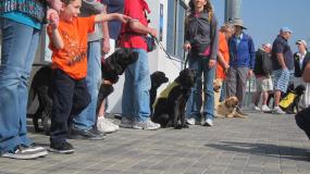 Los perritos esperan con paciencia su turno para subirse al tren en Union Station.