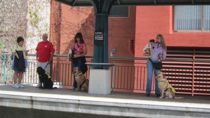 Los perritos hicieron gala de su buen comportamiento. Aquí, en la estación Del Mar.