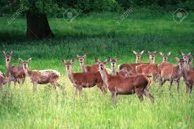 Morris County White Tailed Deer Management Program