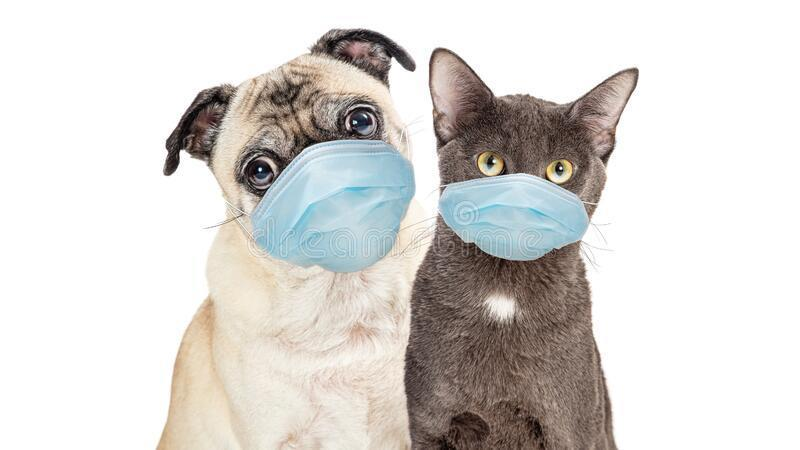 THE RABIES CLINIC IS FULL! No appointments available