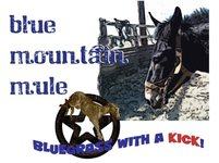 Blue mountain mule 01