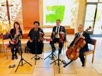 String quartet   ocdamia music group