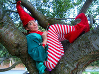 Elfintree l