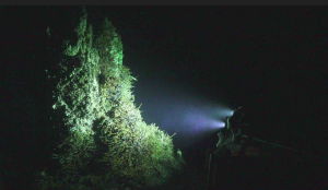 The UW-APL-built high definition camera lights up the 12-13 ft tall hot spring deposit called Mushroom, nearly 5000 ft beneath the oceans surface at the summit of Axial Seamount. Credit: UW/NSF-OOI/WHOI,V18.