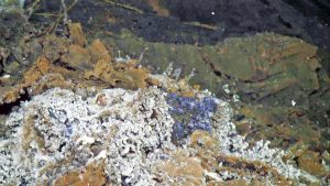 A small cluster of blue cilliates intermixed with limpets grow in a diffuse flow site on the the 2011 lava flow at the summit of Axial Seamount. Credit: UW/OOI-NSF/WHOI; J2-980; V17.