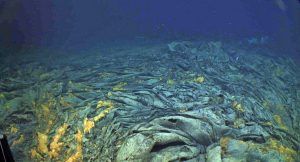 A beautiful ropey, jumbled sheet flow covers the seafloor at ~1500 m beneath the oceans' surface at the summit of Axial Seamount. The lava was erupted in April 2011. Credit: UW/OOI-NSF/WHOI; J2-980; V17.