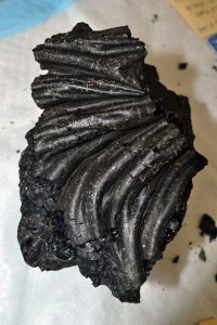 A glas coated sheet flow sample recovered on Jason Dive J2-980 from the April 2011 lava flow on Axial Seamount. Credit. Mitch Elend, University of Washington, V17.