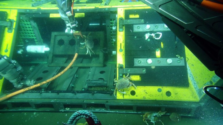 The Benthic Experiment Platform at the Oregon Shelf site houses numerous crabs. Credit: UW/NSF-OOI/WHOI; V16.