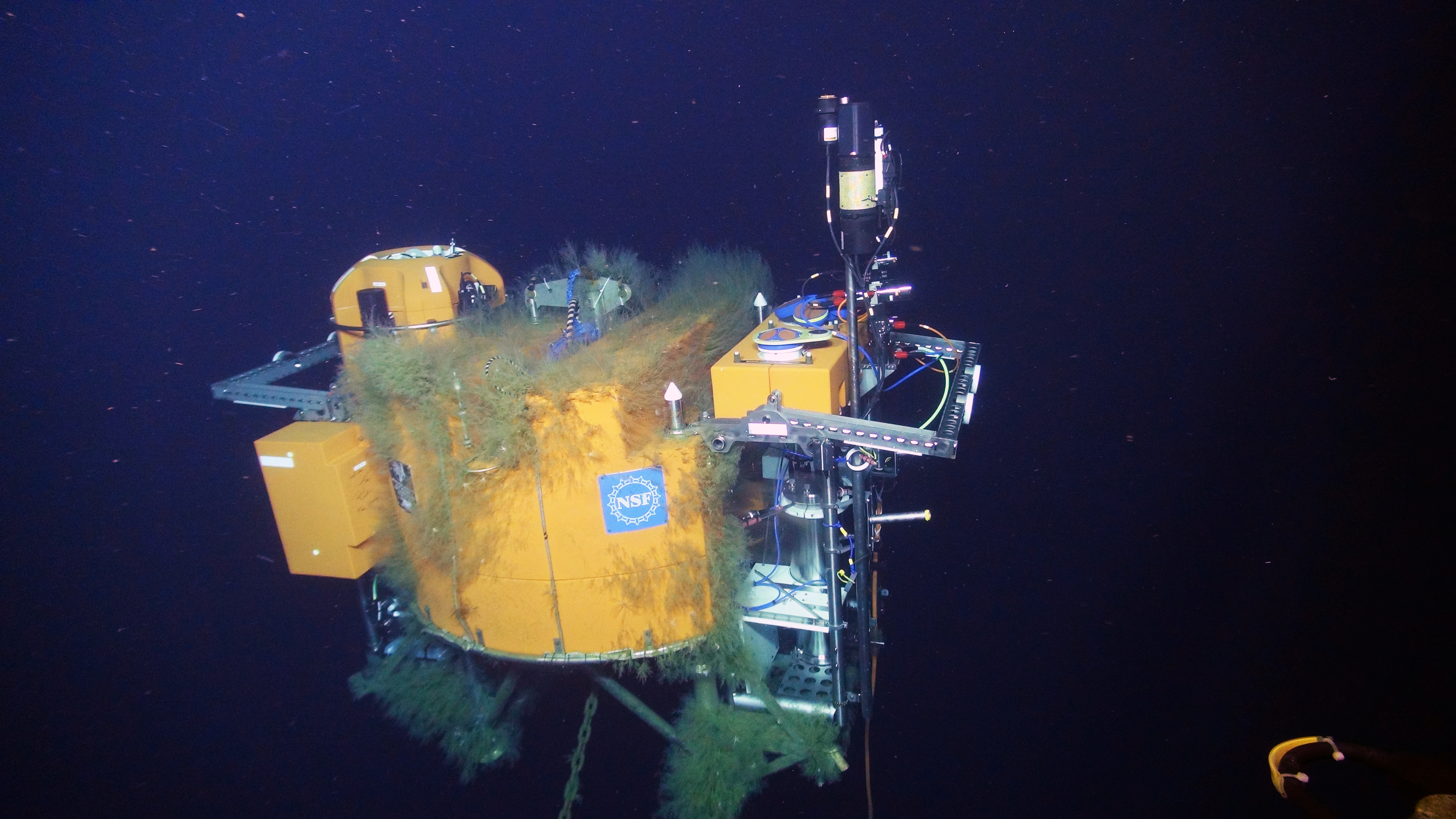 The Shallow Profiler Mooring 12-ft across, 7 ton platform hosts a new Science Pod (left) and Platform Interface Assembly (PIA, right) installed on Jason Dive J2-917 as part of the annual maintance operations for these moorings. The 'mother' platform sprouts a variety of life that was not present last year when we turned the Science Pod and PIA. Credit: UW/OOI-NSF/WHOI; V16.
