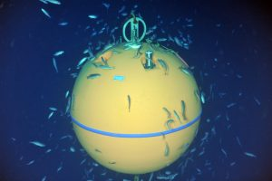 The float for the Deep Profiler Mooring at the Base of Axial Seamount has become a habitat for schools of fish. Credit: NSF-OOI/UW/ISS; V15. ROPOS Dive R1860.