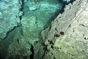 The 'Pinnacle' on the west side of the main methane seep site at Southern Hydrate Ridge, is a >20 m tall, rugged carbonate edifice teaming with life - dominated by high densities of soft corals, hagfish, and small squat lobsters that hide in small cavities. Credit: NSF-OOI/UW/ISS, V15.