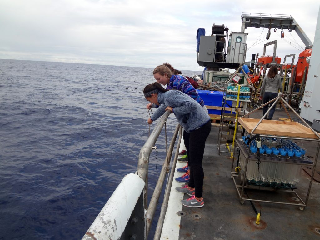 Students onboard the R/V Thompson collect velella velella (by-the-wind-sailors) off the starboard side during Leg 1 of the Cabled Array VISIONS'15 expedition. Credit: Mitch Elend, University of Washington.