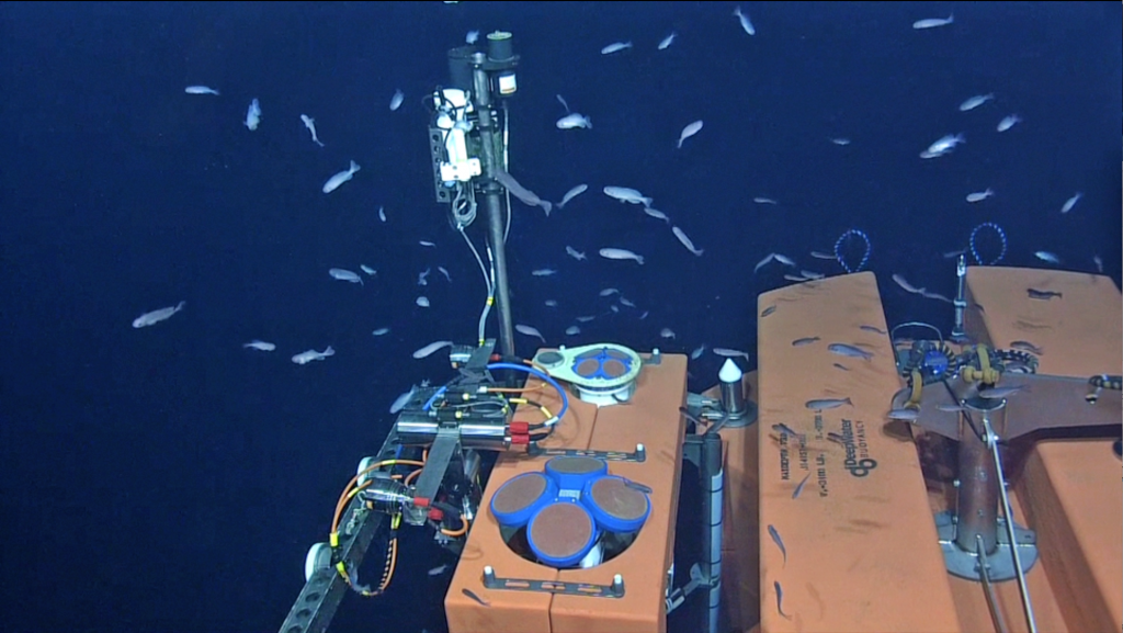 A school of small fish greeted the ROV ROPOS during our first visit to this ~ 600 ft deep platform since it was installed in 2014. Credit: NSF-OOI/UW/ISS; Dive R1832; V15.