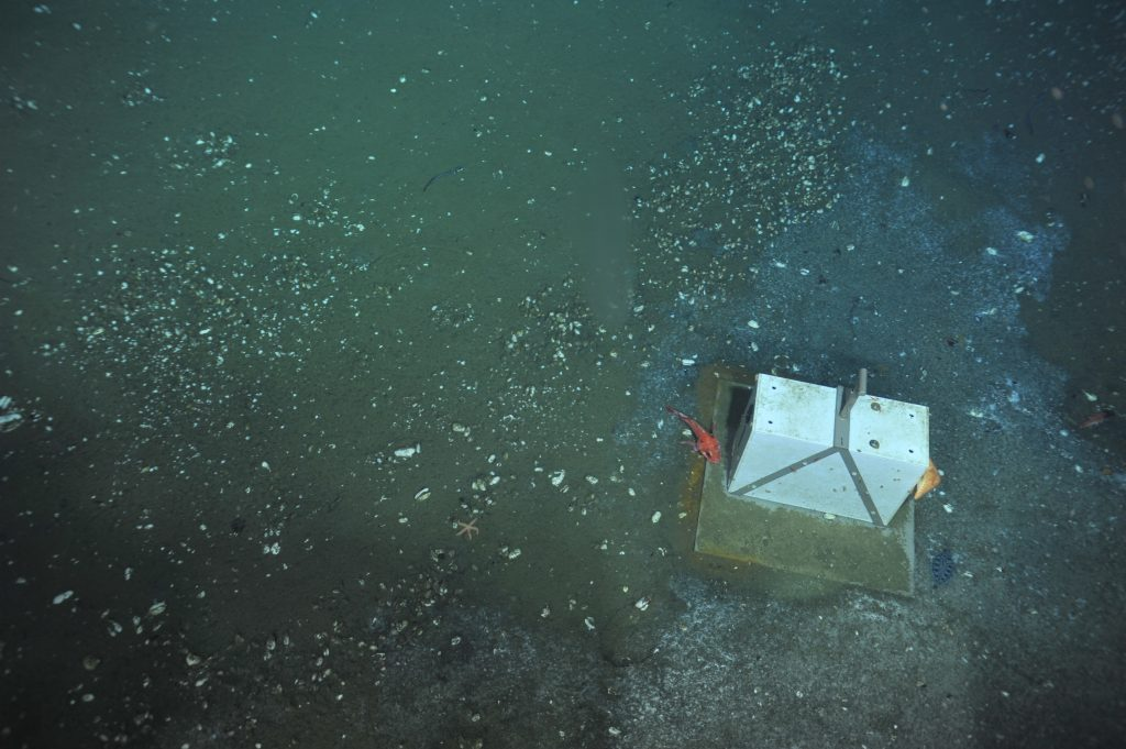 """An old osmosampler at Hydrate Ridge, near Einstein's Grotto. It will be replaced with a newer instrument on a future dive. In the meantime, it serves as """"habitat"""" for a rockfish and sea star.  Photo Credit: NSF-OOI/UW/CSSF, Dive R1750, V14"""