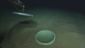 Replacing the caisson cover near marker 15 at Hydrate Ridge, after inspecting the eventual deployment location of a seismometer at that site. The caisson (the hole in the sediment at center) was excavated using a suction tube attached to the ROV during a previous expedition.  Photo Credit: NSF-OOI/UW/CSSF, Dive R1750, V14