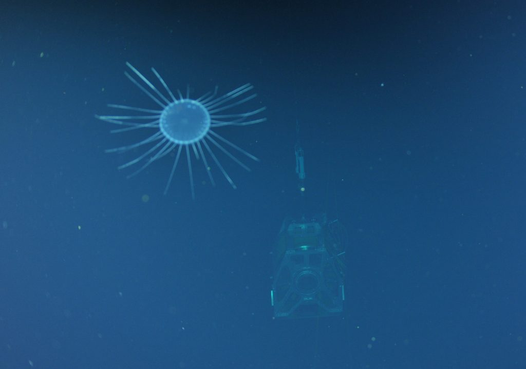 An interesting perspective of this Dinner Plate Jelly (Solmissus sp.) and the Remotely Operated Cable Laying System (ROCLS) spool, makes the jelly look enormous. Photo credit: Photo credit: NSF-OOI/UW/CSSF; Dive R1604; V13