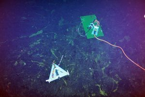 A short-period seismometer (OBSSPA301) is installed ~1.3 km east of the ASHES hydrothermal field. A cable connects to a medium power junction box in the field. During testing with ROPOS, this seismometer recorded a small earthquake. VISIONS '13, Leg 4. Photo credit: NSF-OOI/UW/CSSF.