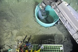 """The ROV ROPOS vacuums out the sediment in a caisson at the summit of Southern Hydrate Ridge. In 2014, a broadband seismometer will be placed in the caisson and covered in silica beads to optimize aquisition of acoustic signals by lowering ocean """"noise"""" (e.g. currents). Photo credit: NSF-OOI/UW/CSSF."""