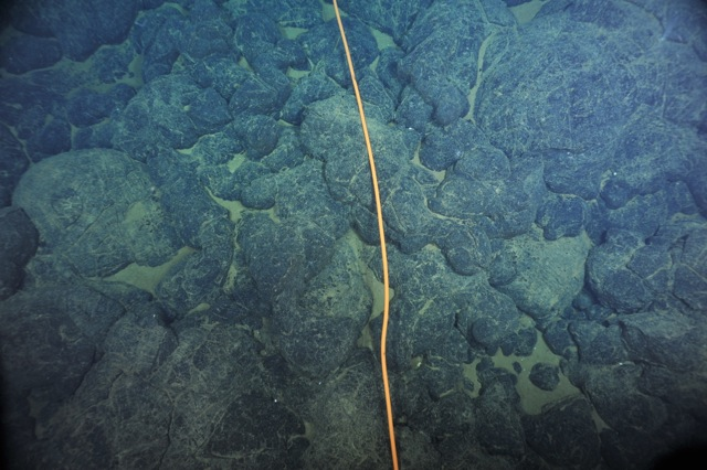 This orange, secondary cable was laid about one week ago by ROPOS. The image, taken during the cable inspection portion of Dive 1608, shows the cable on top of pillow basalts on the seafloor at Axial Volcano.  	Photo credit: OOI-NSF/UW/CSSF