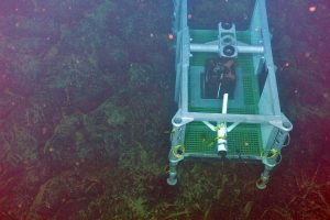 This full-sized Junction Box frame was sucessfully deloyed and recovered in the International District Hydrothermal Field at Axial Seamount using the ROV ROPOS during the August 2011 VISIONS '11 expedition. During the VISIONS'13 cruise two fully built out medium-power J-Boxes will be deployed here that will provide power and communications to extension cables and sensors deployed at the vent sites. The sensors will include a digital still camera, mass spectrometer, fluid and DNA samplers, bottom pressure and tilt sensor, a temperature-chlorinity probe to measure boiling fluids exiting the vents, and a short-period seismometer.