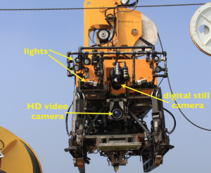 The positions of the HD video camera (the live stream image), the digital still camera, and lights in ROPOS's typical configuration.