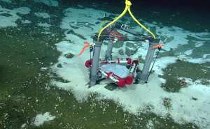 One of Evan Solomon's mosquitoes (a flow meter) deployed at Southern Hydrate Ridge August 14, 2011 with the ROV ROPOS.