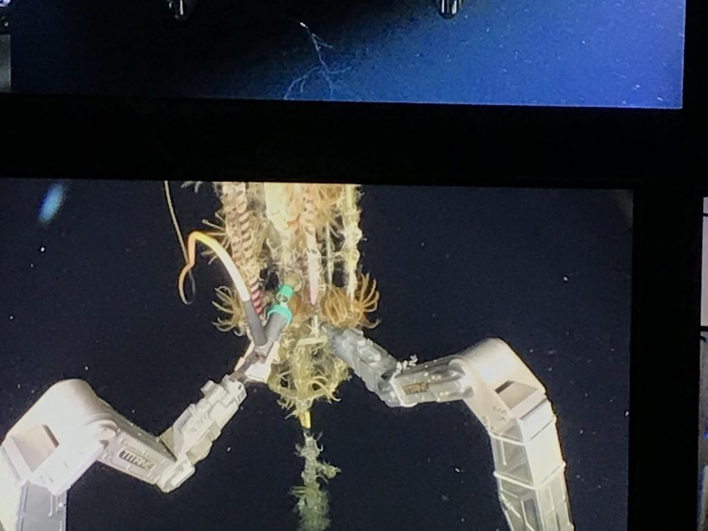 Brittle stars and other organisms encrusting the cage around the profiler power and data cable connection. Image Credit: M. Vardaro, University of Washington, V19