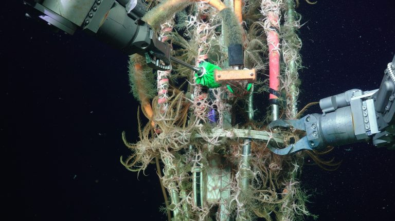 Brittle stars and feather stars encase a wet-mate connector frame on the Oregon Offshore Shallow Profiler Mooring Leg ~ 210 m water depth. Credit: UW/NSF-OOI/WHOI; V19.