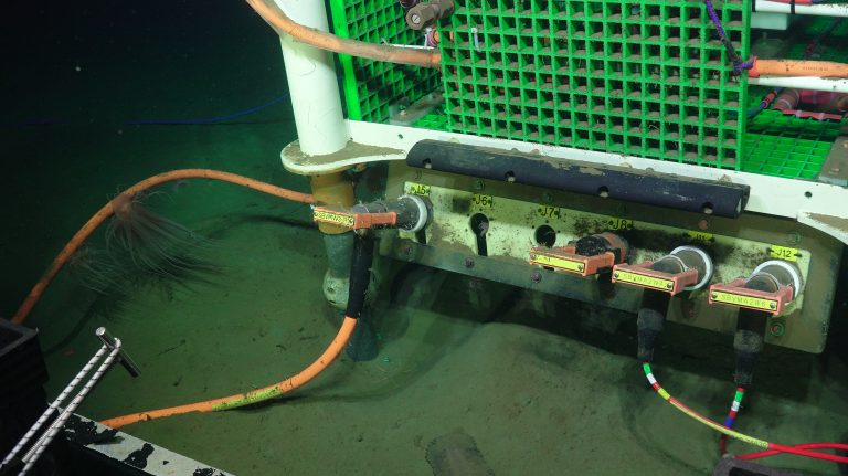 Slope Base junction box with sea anemones and sea cucumber. Photo Credit: UW/NSF-OOI/WHOI, V19