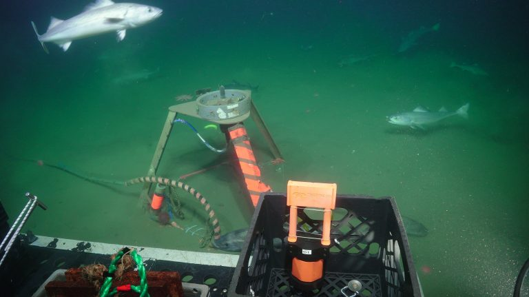 Fish school around the Oregon Offshore hydrophone (underwater microphone) tripod as it is prepared for recovery in 2019. Photo Credit: UW/NSF-OOI/WHOI, V19