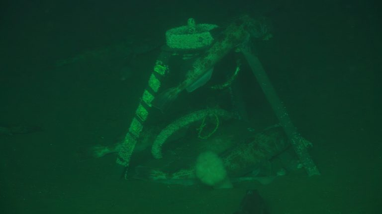The Oregon Shelf hydrophone (underwater microphone) apparently became a popular gathering place for fish (lingcod) during the past year. Photo Credit: UW/NSF-OOI/WHOI, V19