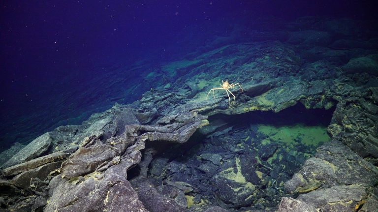 A spider crab at the International District inspects the edge of a small collapse zone. Credit: UW/NSF-OOI/WHOI. V20.