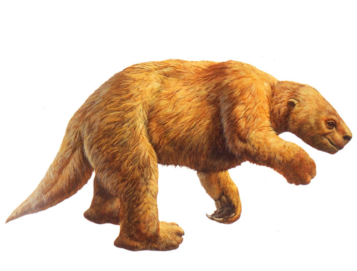 The Harlan's Ground Sloth was one of the so-called megafauna that lived in L.A. during the Pleistocene. Scientists are still piecing together the smaller members of the ecosystem that thrived here more than 11,000 years ago. Drawing: Page Museum.