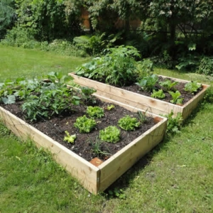 Raised Garden Beds Tanalised Timber - 2.4m (8ft) x 1.8m (6ft)