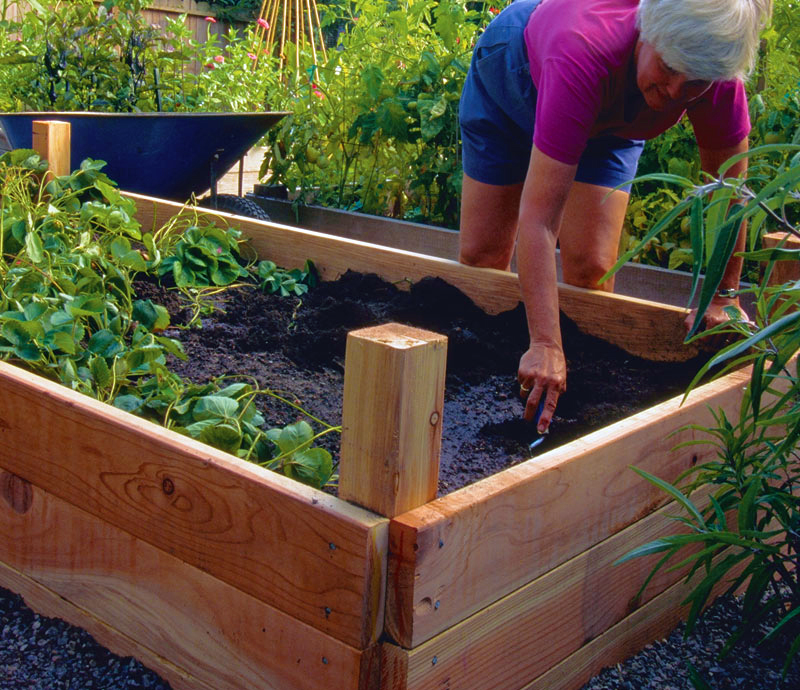 Creating Our First Vegetable Garden Advice Please: High Quality Trade Supplies