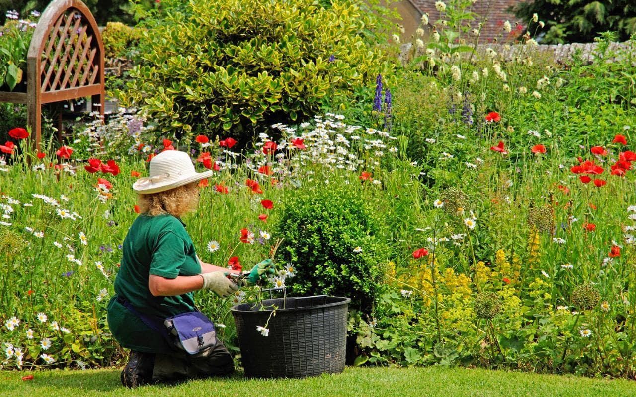 lady-gardening-xlarge.jpg