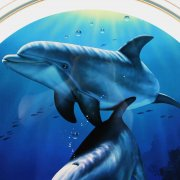 Christian Riese Lassen Signed 35x35 Dolphin Art Display