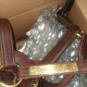 RARE Charismatic Stallion Halter (2003) with COA and Letter