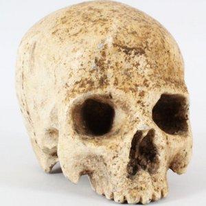 Troy Movie Prop Skull