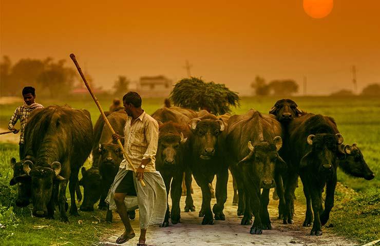 Fotografías de Carlos López Ayerdi a Varanasi