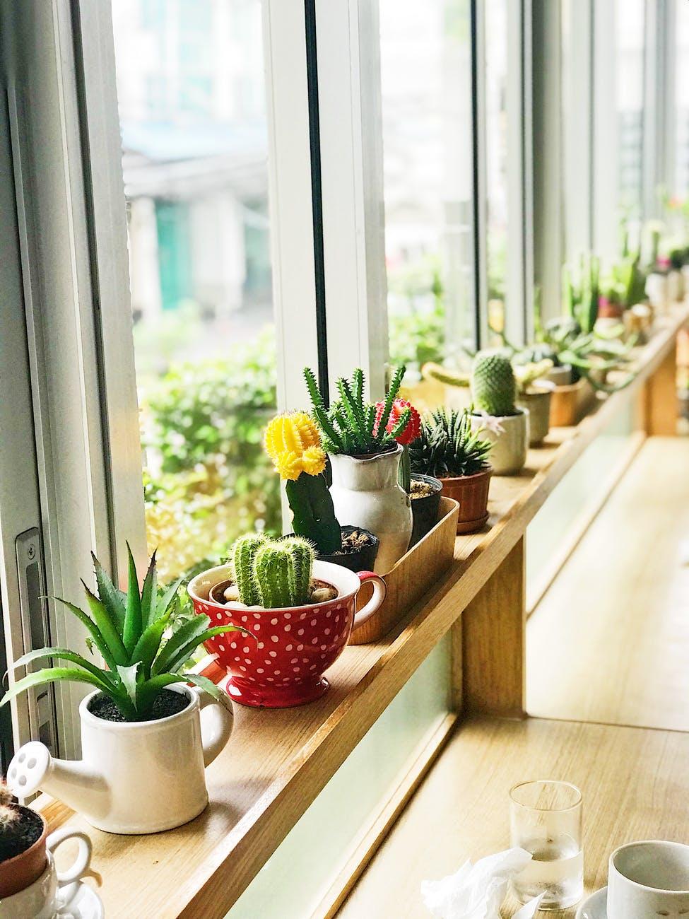 Ideas para crear tu propio jardín
