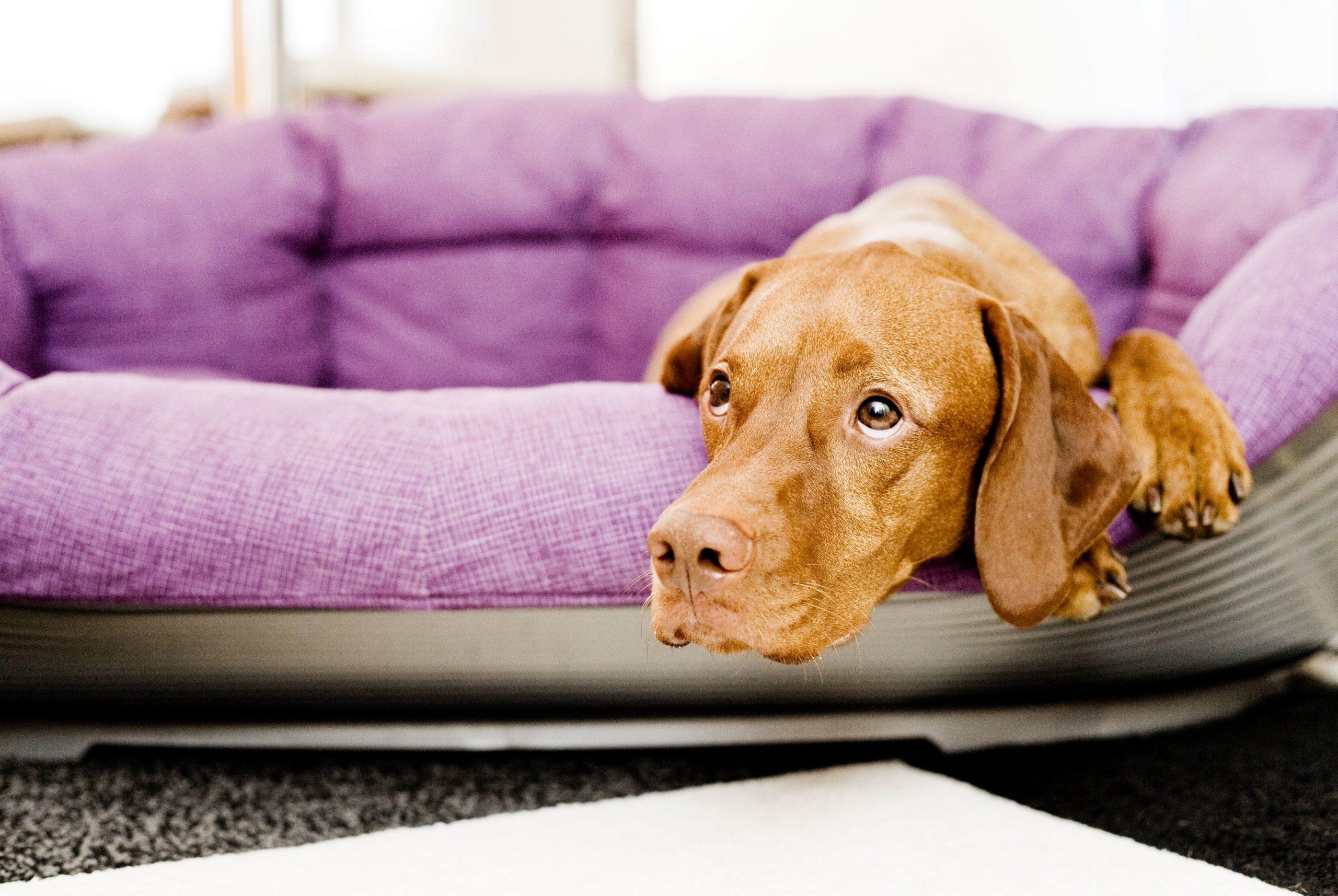 Los perros necesitan su espacio cuando los dueños hacen teletrabajo