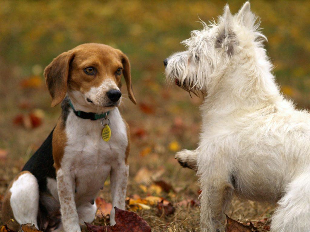 Cómo tratar heridas cortantes en las patas de los perros